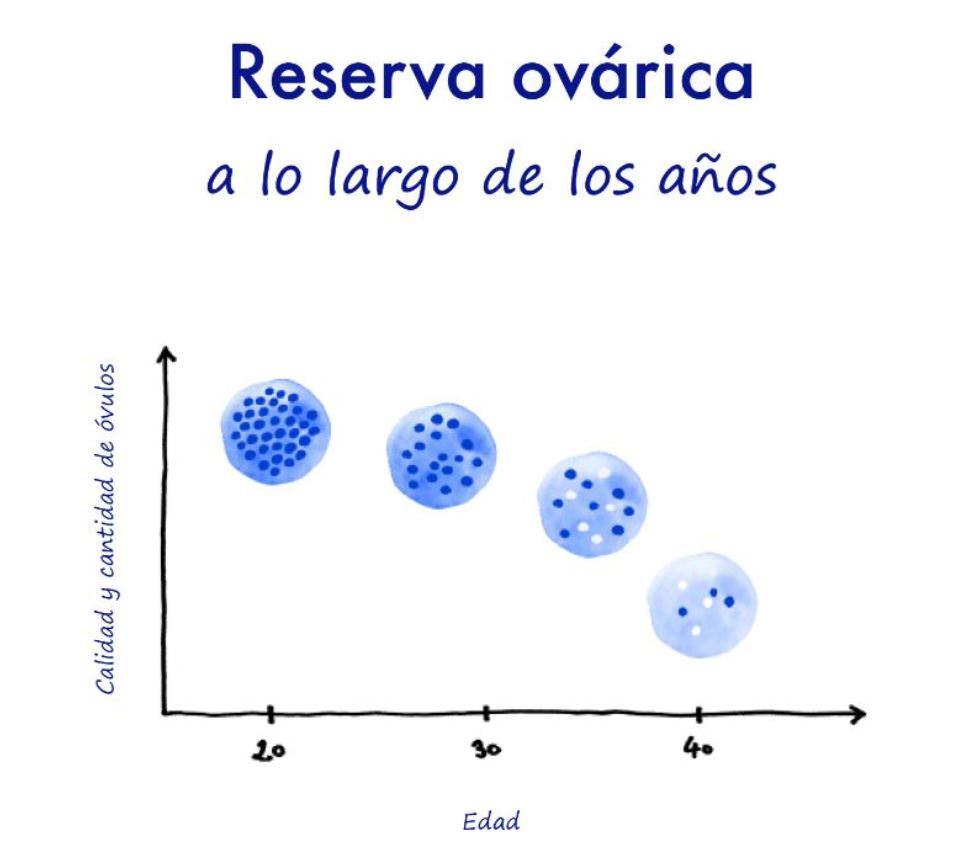Reserva ovárica importante conocerla- fertilidad